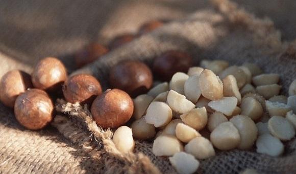 Kacang Macadamia di Korea Selatan