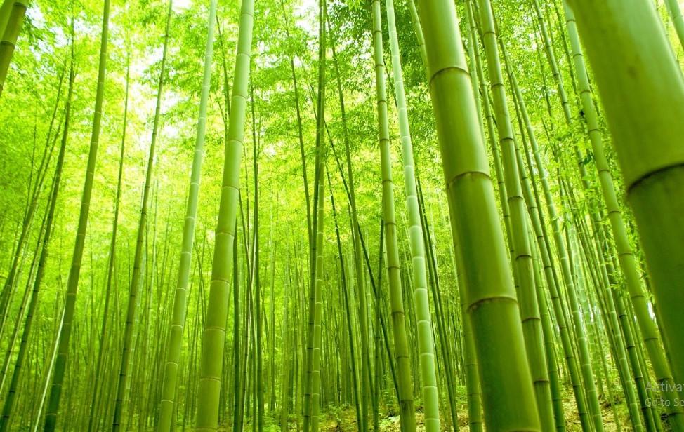 Inspirasi: Belajar dari Filosofi Hidup Pohon Bambu