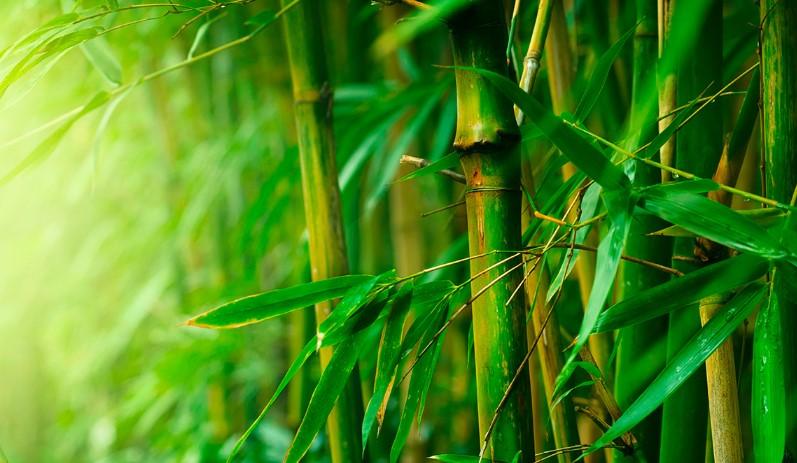 Filosofi Hidup Pohon Bambu1